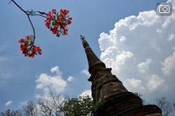 Ват Умонг в Чианг Мае