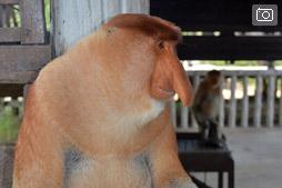Боракай — Бали трип, питомник обезьян-носачей в Лабук Бэй