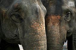 Парад на открытии турнира по поло на слонах в Чианг Саене