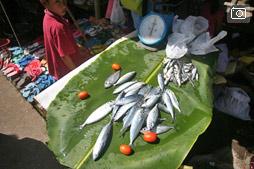 Где купить рыбную кашу, амулет знахаря и корову впридачу