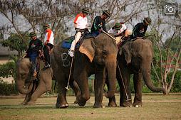 Турнир по поло на слонах в Чианг Саене