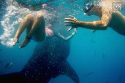 Боракай-Бали трип, день четвертый, к акулам в Ослоб