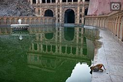 Galta — очень красивое место в окрестностях Джайпура