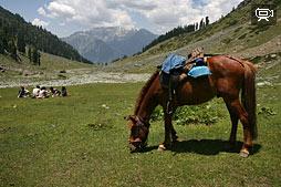 Видео о походе на лошадях к озеру Тулян