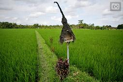 Наша жизнь на Бали. Убуд. Часть первая, о Пенестанане.