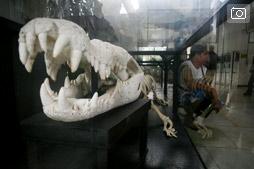 К крокодилам в Ираван